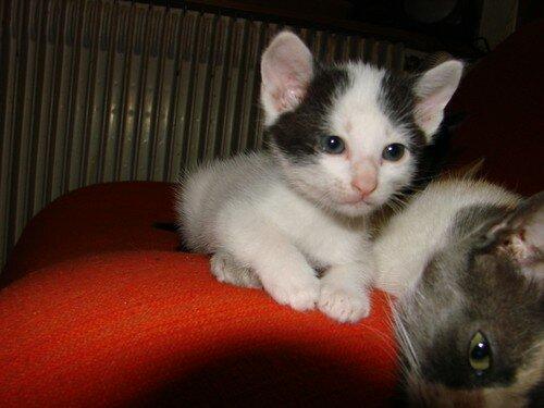 2008 04 27 Un petit chaton de Blanco