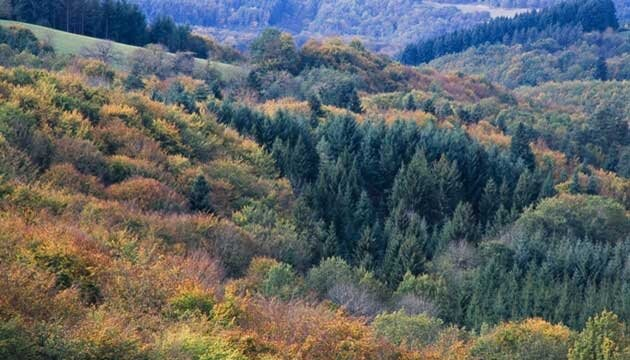 paysage-montagne-bourbonnaise-couleurs-automne