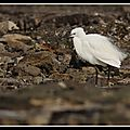 Des oiseaux sur les rochers à la Plage du <b>Rivage</b>, en hiver et au printemps