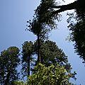 <b>Road</b> <b>Trip</b> Ouest USA - J9 - Yosemite National Park