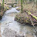 Bois de Colfontaine - Ruisseau d'Elwasmes - 20130106_27