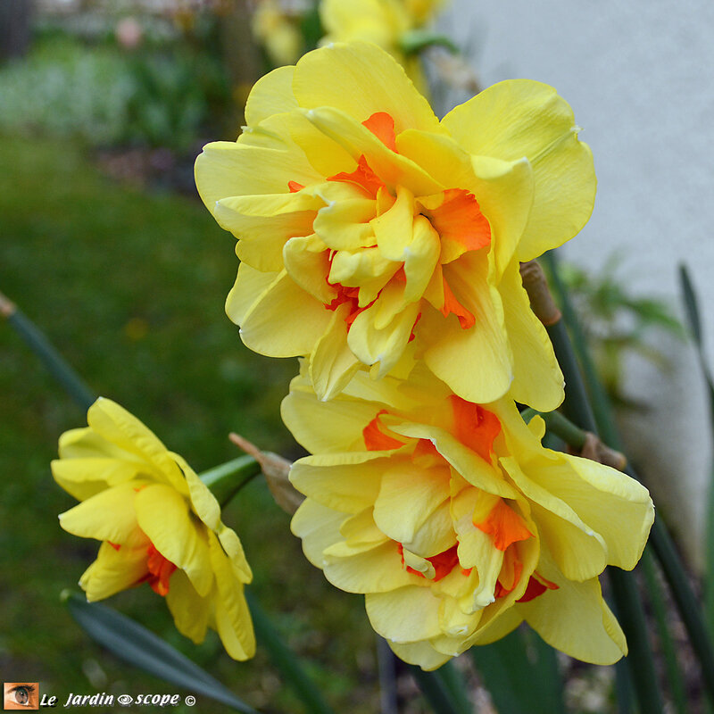 Narcisse-double-Tahiti-4