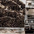 recolte du bois
