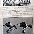 Chasse <b>chien</b> pointer illustration ancienne sp60