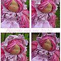 Camille poupée waldorf 22 cm