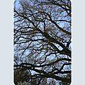 « un bon arbre peut loger dix mille oiseaux. »