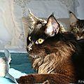 Les petits chats sont devenus grands ...