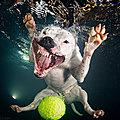 Rélocos - Ce photographe réalise des portraits hilarants de <b>chiens</b> sous l'eau