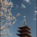 174-Senso-ji-Sakura