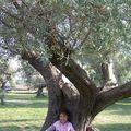 jardin d'oliviers centenaire