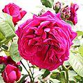 fleur 4 nathalie dentzer