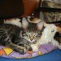 Asia et Koraille dorment ensemble 006