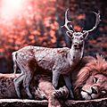 Le roi Lion et le <b>faon</b>