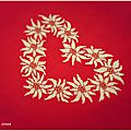 cuore Edelweiss 2
