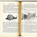 Escargot vintage