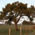 L'arbre à guy !!