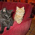 ils aiment le canapé