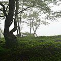 Hêtres dans le brouillard au Serròt de Boish.