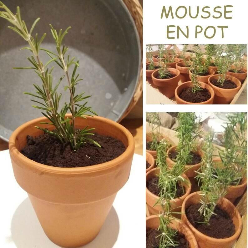 Mousse en Pot
