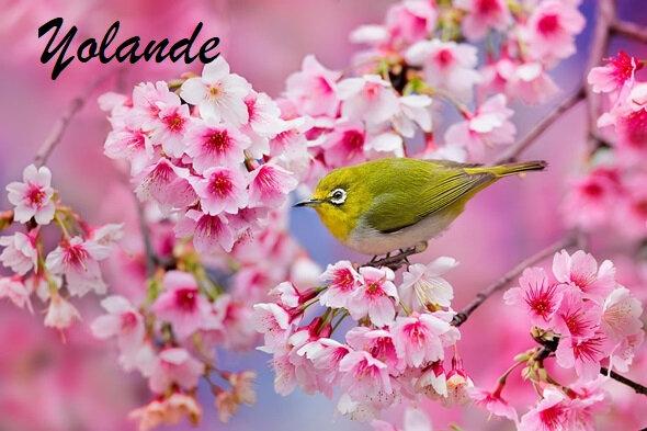 printemps-fleurs-japon
