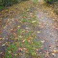2009 08 25 Le chemin remplis de feuilles mortes