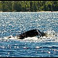 Whale overwater (2)