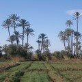 Palm's land