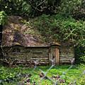 Cabane au milieu des rhododendrons...