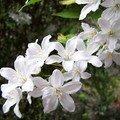 Témoins de notre vie, les fleurs sont porteuses d'une histoire ancienne, de mystères, et surtout d'émotions.
