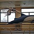 Biarritz, Musée de la Mer, Collections, squelettes