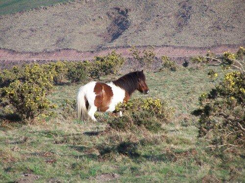 Mont du Calvaire-cheval sauvage