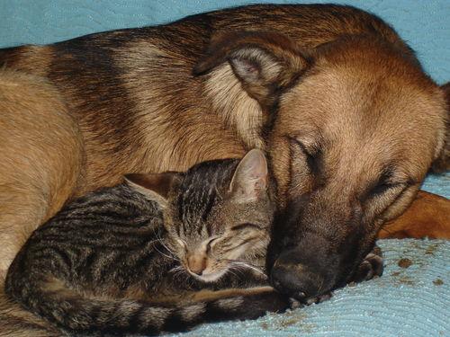 2008 09 24 Kapy et le chaton qui dorement