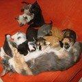 2008 04 23 Les petits chatons qui tètent Papillon