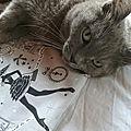 DIY : Un plaid pour mon <b>chat</b> ...