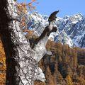 La forêt magique édition 2010