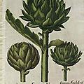 Herbier, les plantes qui soignent - L'Artichaut