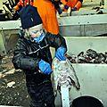 Petit poisson(nier) deviendra grand