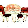 183 Russula emetica, 13 8bre 1893, page 227 409