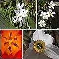 Fleurs mai 2013 (4)