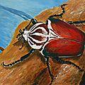 P1020355_scarabee