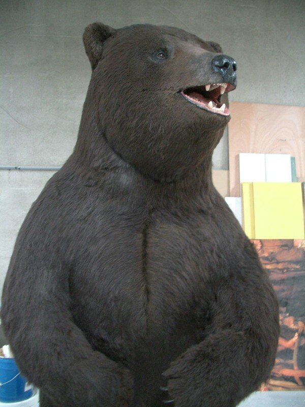 Le Grizzly (2003)