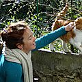 ATTENTION ! coryza - rhume du chat : à soigner très rapidement.