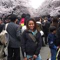 Parc Ueno, milliers de cerisiers