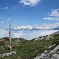 Les Pyrénées, arbre et Pic du Midi d'Ossau (64)