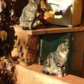 Chats a Roussillon en Provence