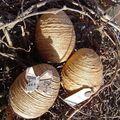 Oeufs de pâques décorés suite