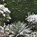 La métamorphose du jardin sous la neige...