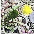 fleurs_juillet12