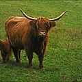 <b>Aurochs</b> ou agneaux de lait ?