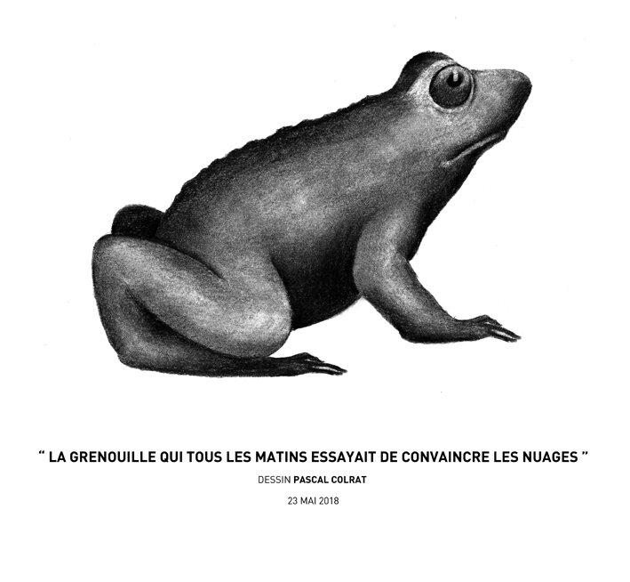 __la_grenouille_qui_tous_les_matins_essayait_de_convaincre_les_nuages__